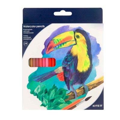 "Карандаши цветные акварельные  ""Kite"" K18-1050 Птицы 24 цвета **"